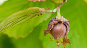 Nut Irrigation