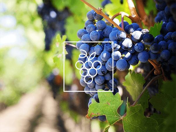 Vineyard Irrigation Solutions